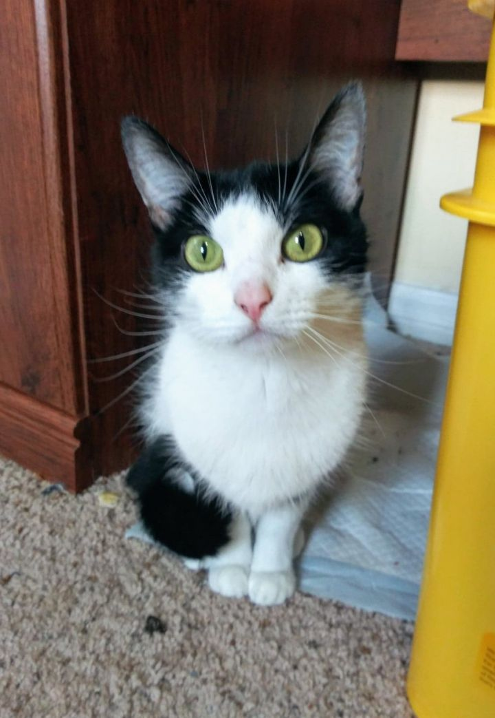 Kitten Adoption Huntsville Al - The Y Guide