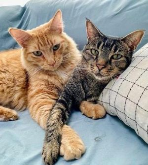 Hi Were Sunny Pumpkin and Minkie We were rescued in Tracy CA after our meowm