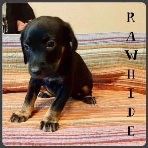 You can fill out an adoption application online on our official website Rawhide TX is a female mi