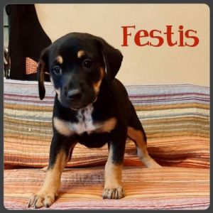 You can fill out an adoption application online on our official website Festus TX is a female mix