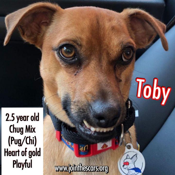 Toby 3
