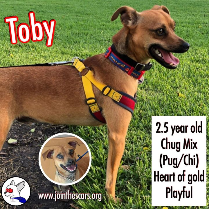 Toby 4