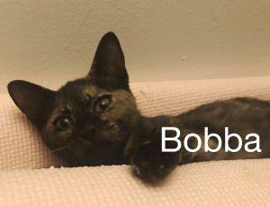 Bobba