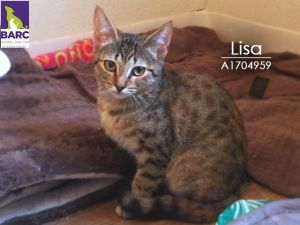 Lisa loves to climb and play with her siblings all day Email BARCFosterhoustontxgov to meet her a