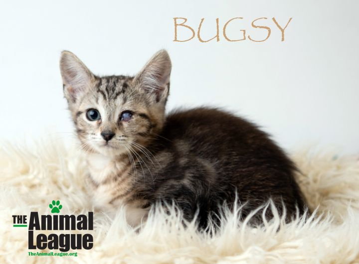 Bugsy 1
