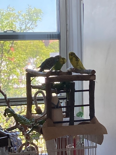 Lemon (m) and Pineapple (m)