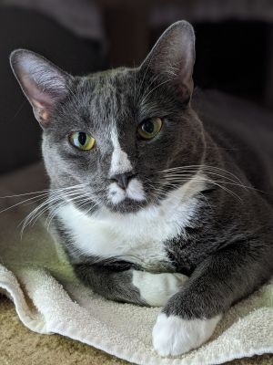 Twinkles has a shy personality but is sweet at heart She needs an adopter willing to patiently wor