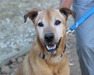 Bruno is a fun dog whose owner died and who would love a new leash on life He got to