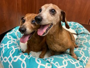 This is Gunther  Wilma They are seniors who are pair-bonded and need each other too much to be spl