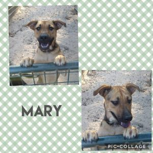 Mary is a sweet Shepard mix that was found dumped in the woods with Max and Lucy