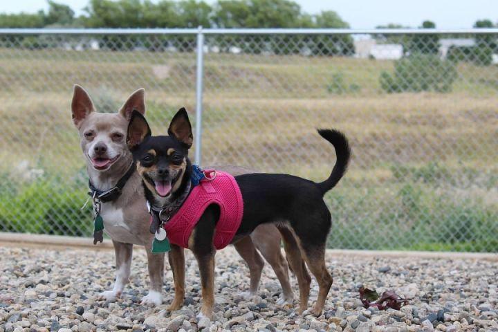 Chino and Peanut 1