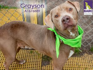 Grayson is a loving dog who enjoys just about everything He gets along well with his foster dog sib