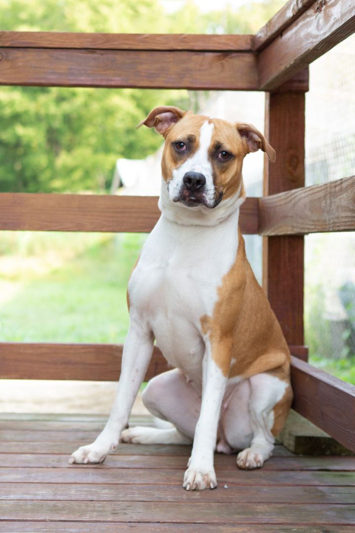 REMMY, an adoptable Mixed Breed in Cape Girardeau, MO