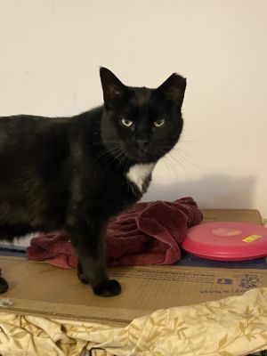If you adopt Aubrey you may not see her for a month unless you pick up your bed ruffle and