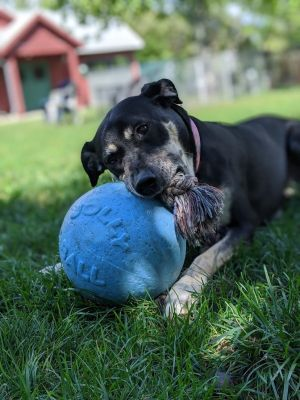 DOB 7713 Miss Lucy is an adorable sweet and loving older girl that desperately wants to find he