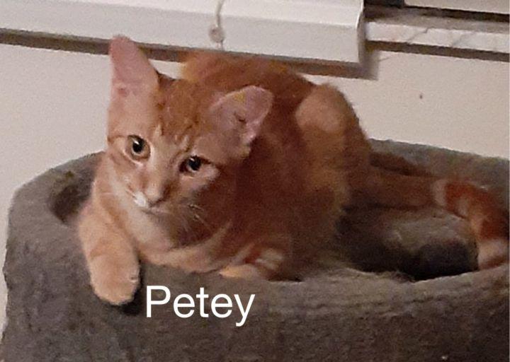 Petey 1