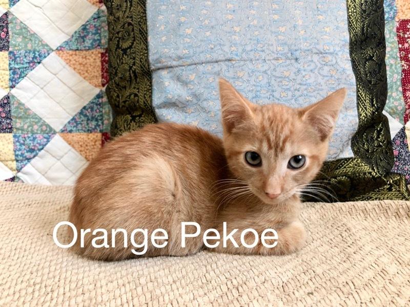Orange Pekoe detail page
