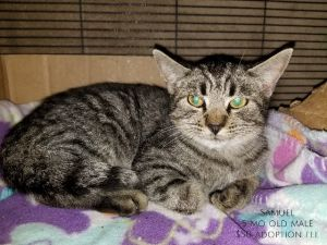 If you would lie to meet an animal please go to our website carejeffcountycom to schedule an appoi