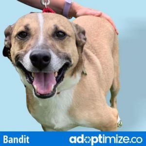 Bandit is a nervous little guy who needs someone who will be patient with him and help show him the