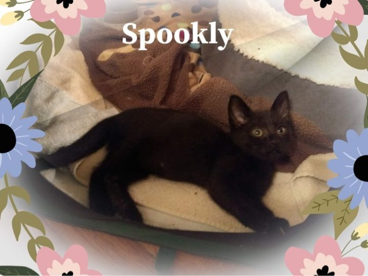Spookly 2