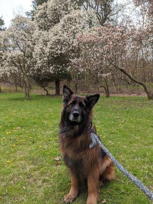 ?bust=1607012846&width=300 - Adopt a Dog