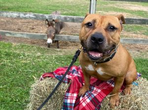 COURTESY POST Rocky is a 4 year old low rider hippo He requires a home with teens and up and