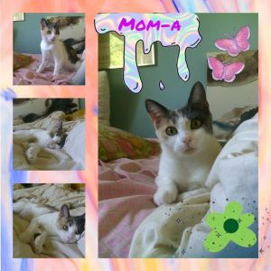 Mom A is a beautiful sweet 15 years old cat and would make a great addition to a forever home