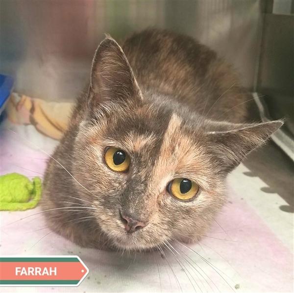 Farrah 1