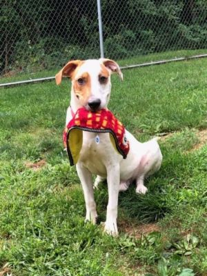 Oakley is a sweet dog He is so playful and LOVES to retrieve Sometimes he brings back two toys at