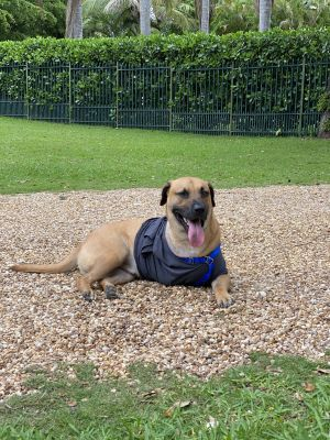 Joey is a sweet funny and playful boy who loves to swim ride in cars sitting up like a kangaroo