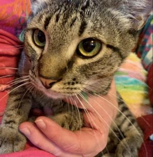 Meet Joe This sweet boy is in need of a forever home Hes a lovebug and playful boy and so