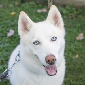 Dogs For Adoption Near Ann Arbor Mi Petfinder