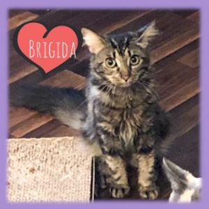Brigida is a beautiful sweet and intelligent girl who likes to play and will love you for opening y