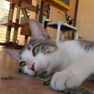 Meet MamaCats aka MC Shes a fun-playful cat whos equally affectionate and independent MC likes t