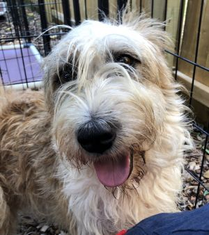 This shaggy gal is Tess and we are loving her stylish bed head look Tess came t