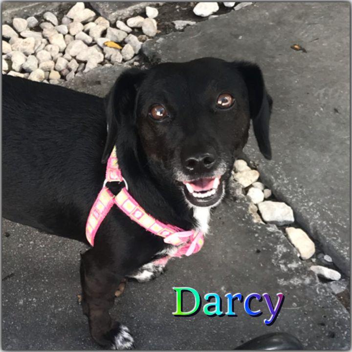 Darcy 2