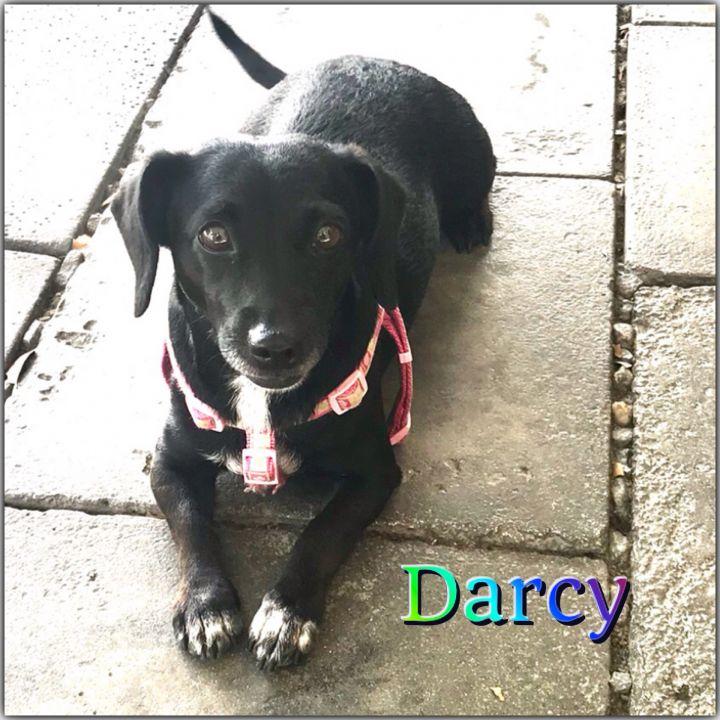 Darcy 1