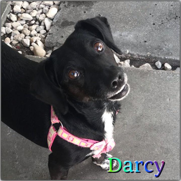Darcy 3