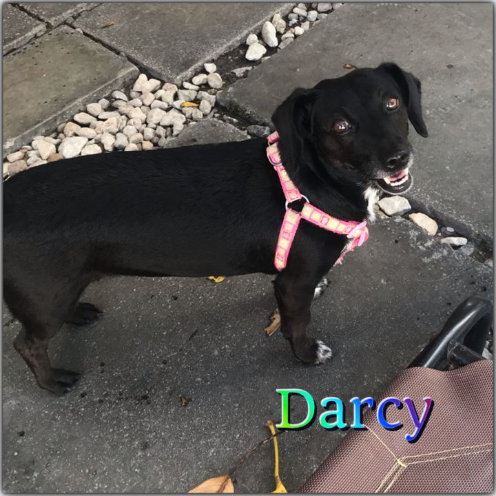 Darcy 4