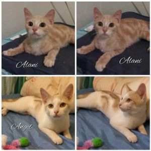 ANGEL and ALANI were rescued near a community cat colony in the Bronx Angel was sitting alone on th