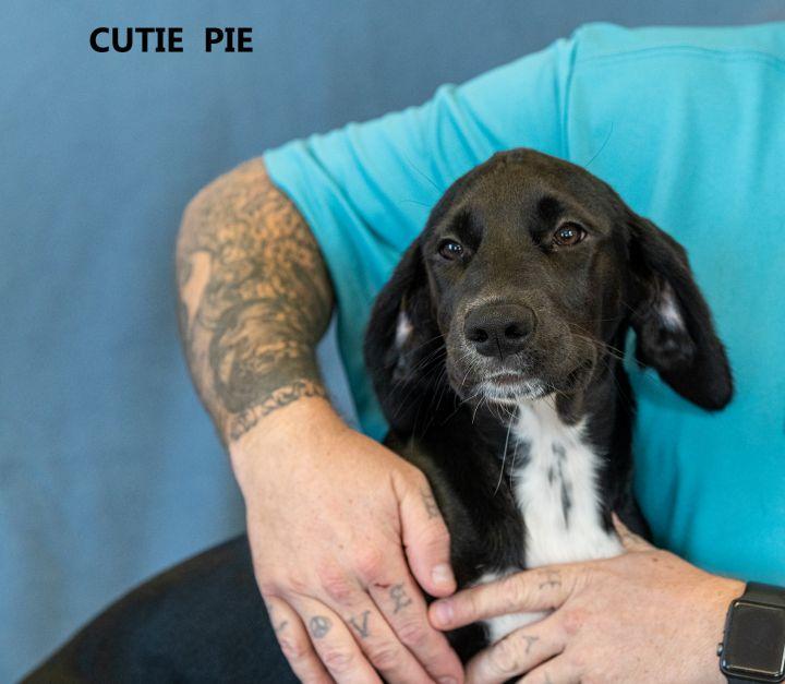 Cutie Pie 1