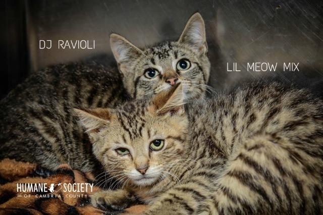 Lil Meow Mix 2