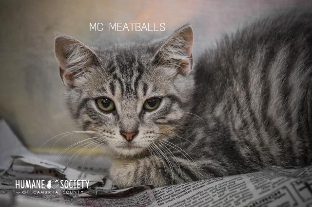 MC Meatballs 2