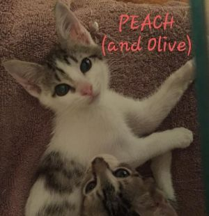 Peach is a beautiful little angel She is a quiet companion playful and the very best buddy of Oli