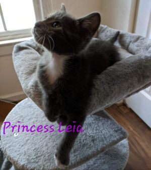 Princess Leia is a Princess indeed The only girl in a litter of 4 she is a little lady but