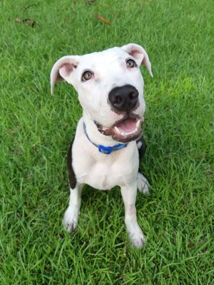 Just look at those polka dots 9M 37lbs Tito Puente is coming to us from Puerto Rico So he is
