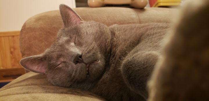 Mr. Kitty 5