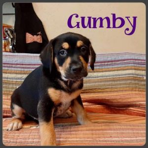 You can fill out an adoption application online on our official websiteGumby TX is a male mixed b