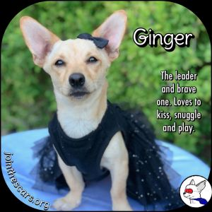 Ginger (and Fred)