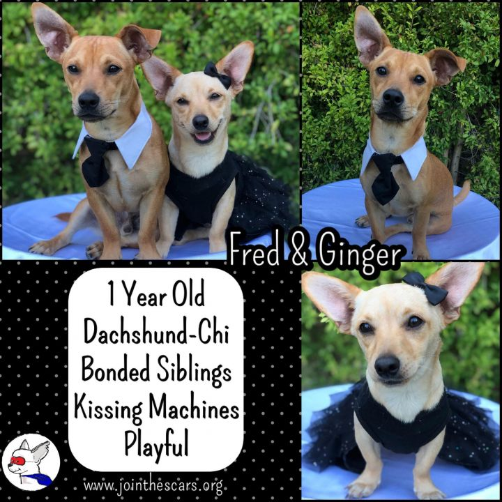 Ginger (and Fred) 3